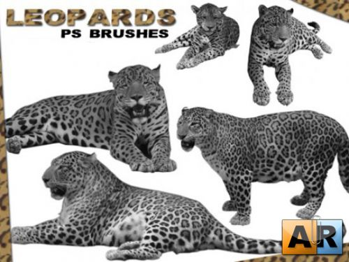 Leopard Brushes