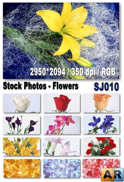 Stock Photos - Flowers