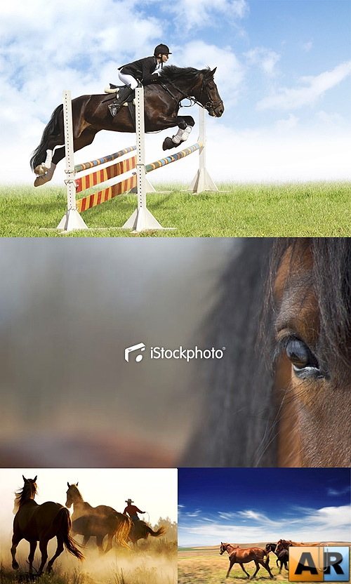 Stock Photos: Horses