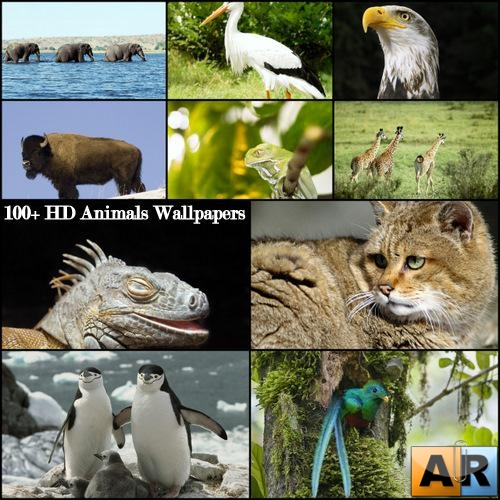 100+ HD Animals Wallpapers