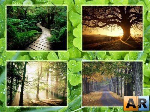 Wall Nature Pack № 11