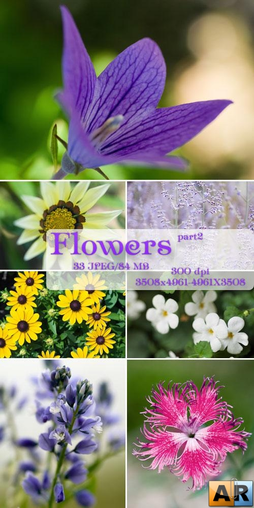 Clipart-Flowers (part2)