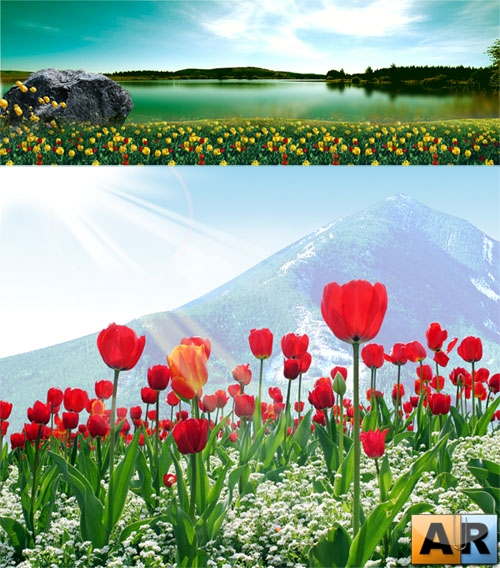 PSD templates - Tulips