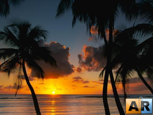 Wallpapers - Palm sunset