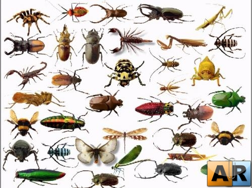 Insects cliparts