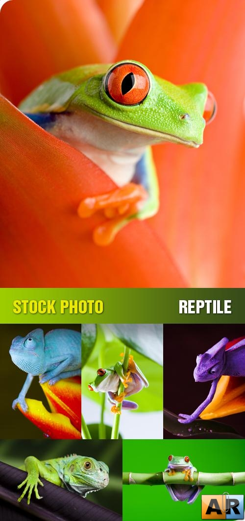 Stock Photo - Reptile
