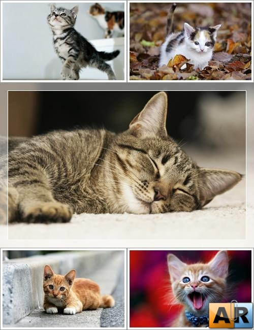 Wallpapers - Funny Cats Pack#8