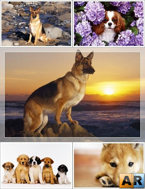 Wallpapers - Funny Dogs Pack#7