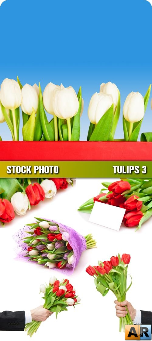 Stock Photo - Tulips 3