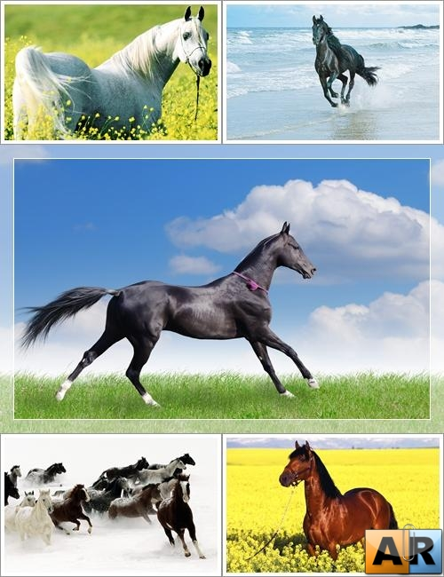 Wallpapers - Beautiful Horses Web Pack