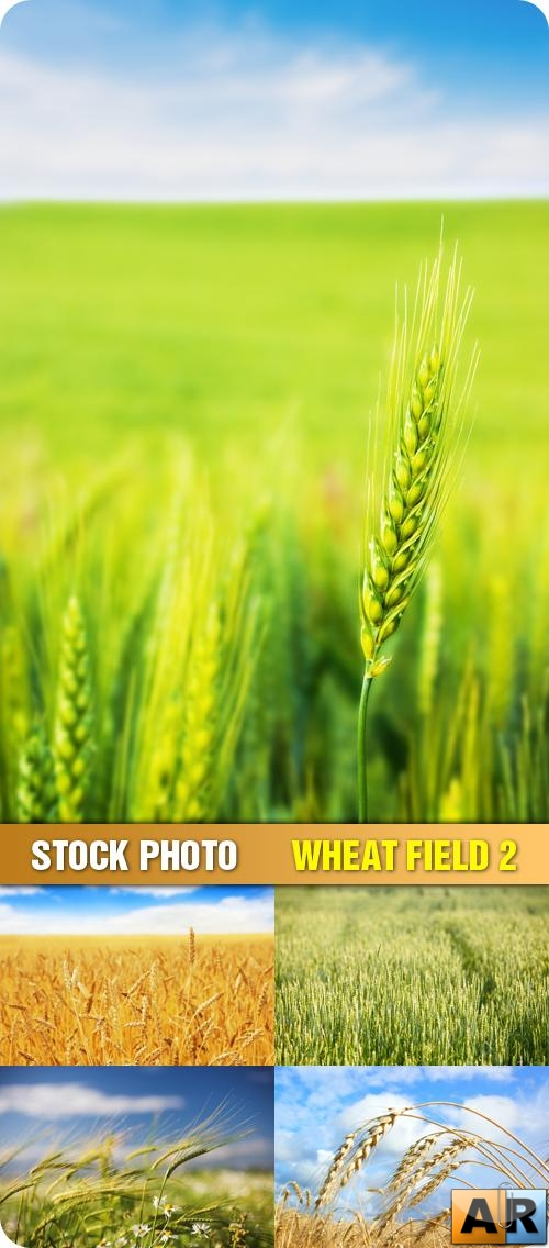 Stock Photo - Wheat Field 2