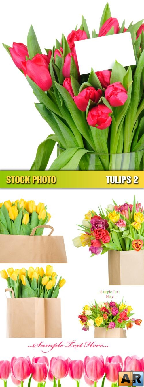 Stock Photo - Tulips 2