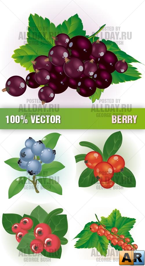 Stock Vector - Berry
