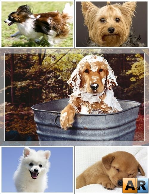 Wallpapers - Funny Dogs Pack#4