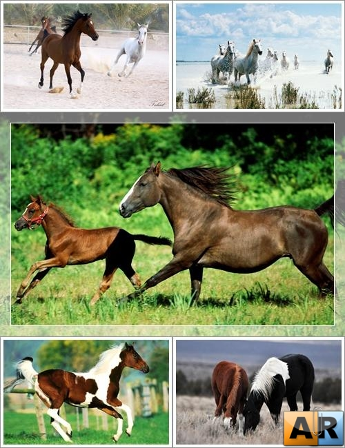 Wallpapers - Beautiful Horses Web Pack#2