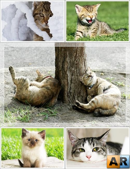 Wallpapers - Funny Cats Pack#4