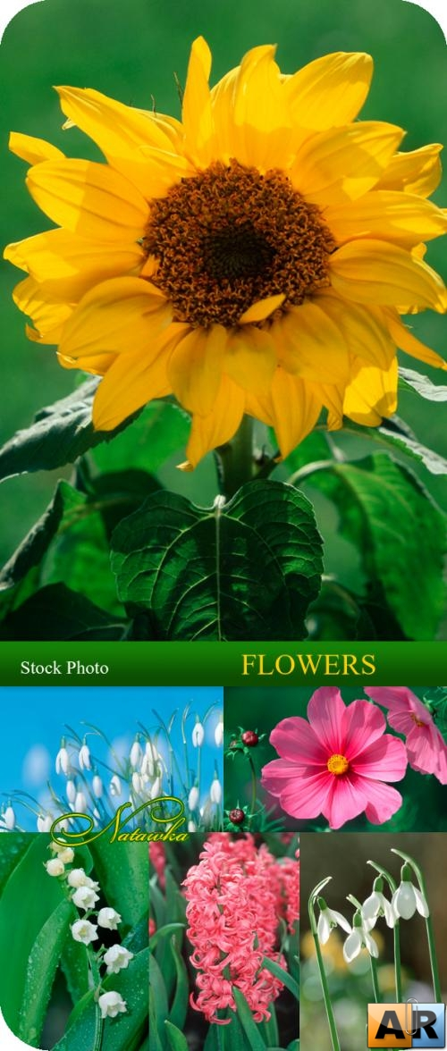 Stock Photo - Flowers