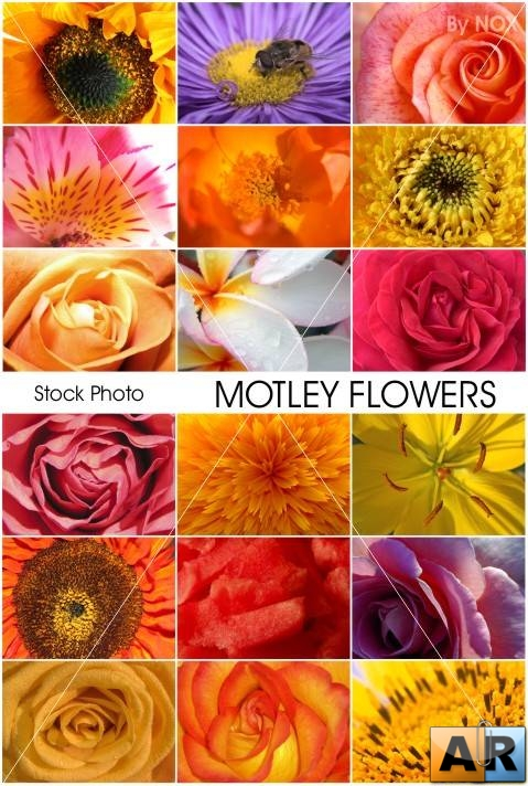 "Stock Photo ""Motley Flowers"""