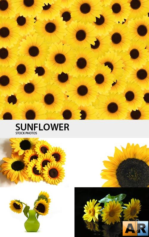 Sunflower (Part 3)