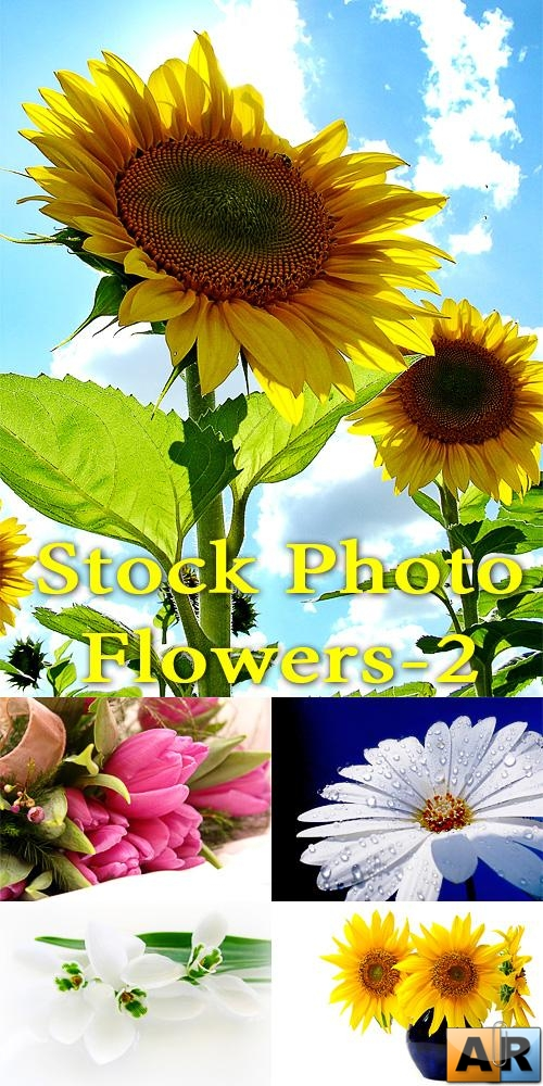 Stock Photo - Flowers 2