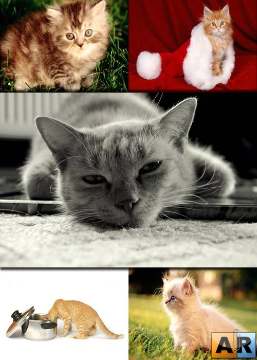 Wallpapers - Funny Cats Pack#21