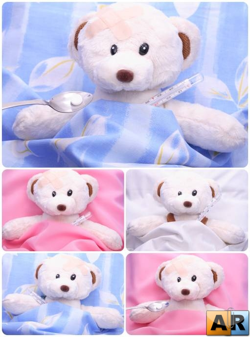Teddy Bear � �����, ���������, ���������