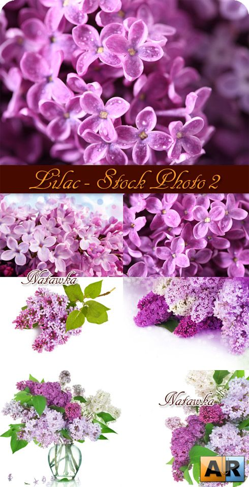 Lilac - Stock Photos часть 2