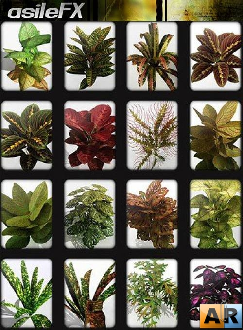 Asilefx – Tropical plant collection