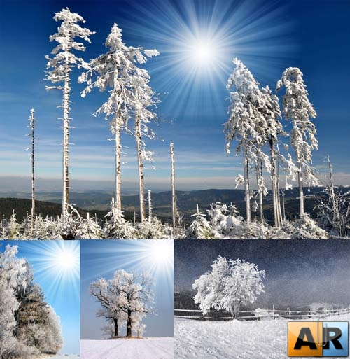 Stock Photo - Beautiful Winter Landscapes