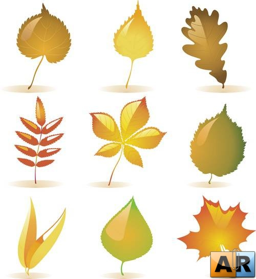 Vector - Autumn Leaves Pack