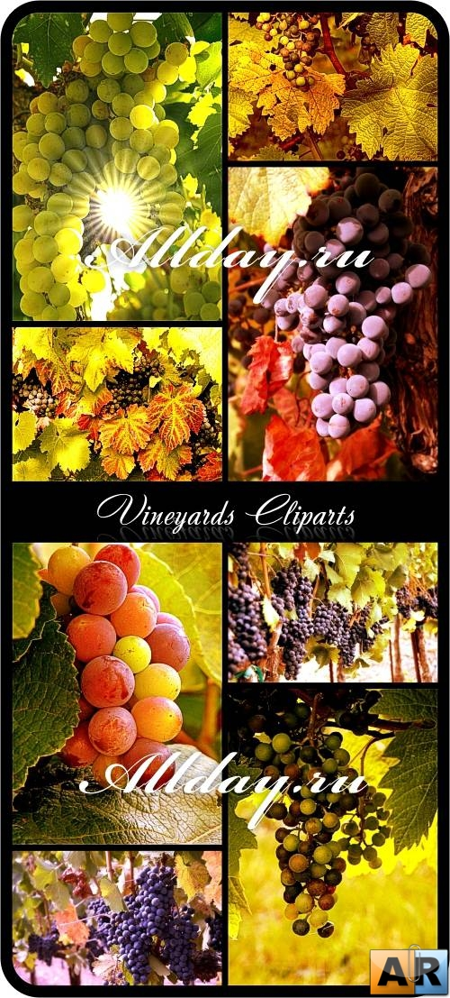 Vineyards Cliparts - Виноградник