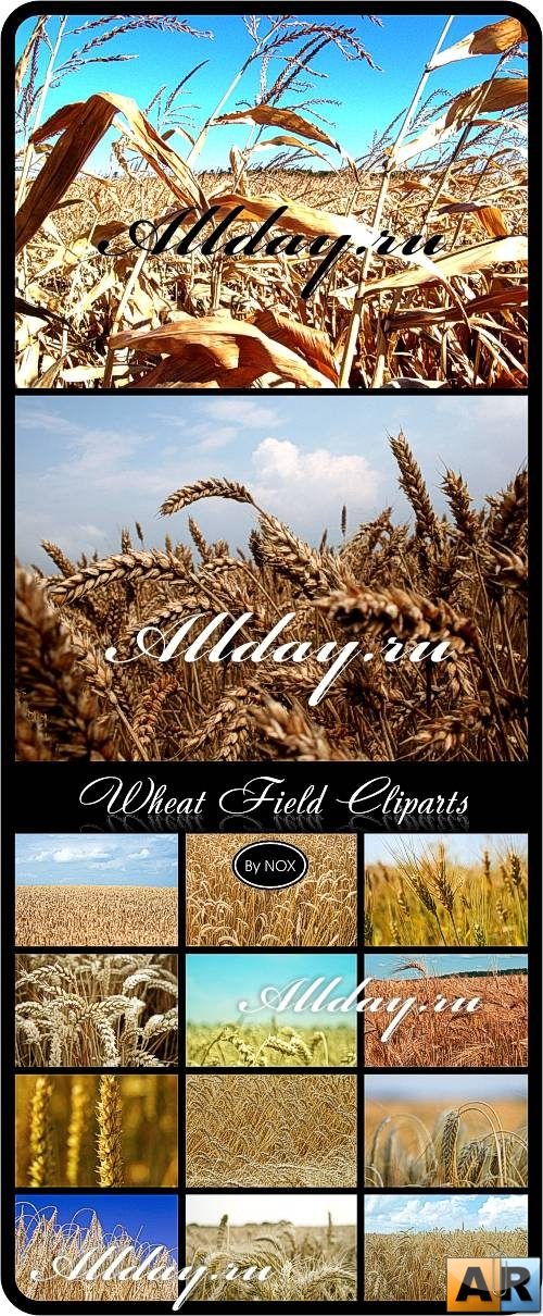 Wheat Field Cliparts