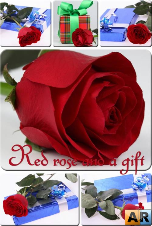 Red rose and a gift