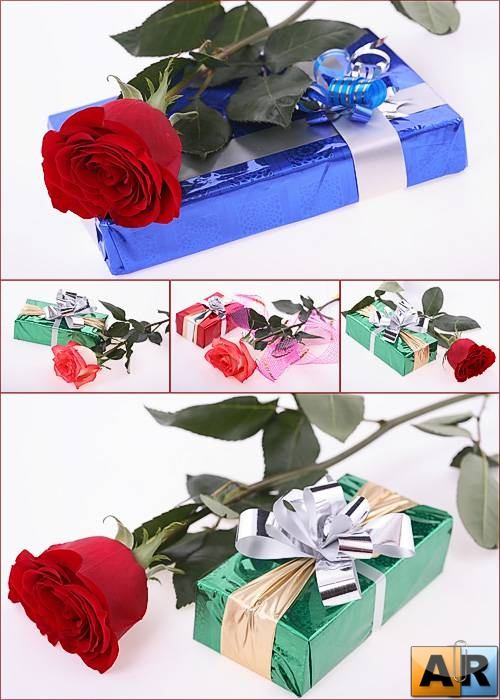 Photostock - Gift, Rose