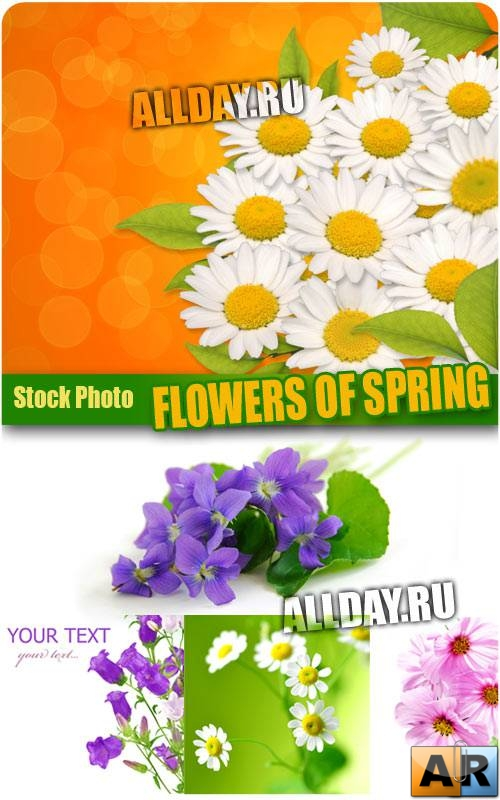 Весенние цветы | Flowers of Spring - Stock Photo