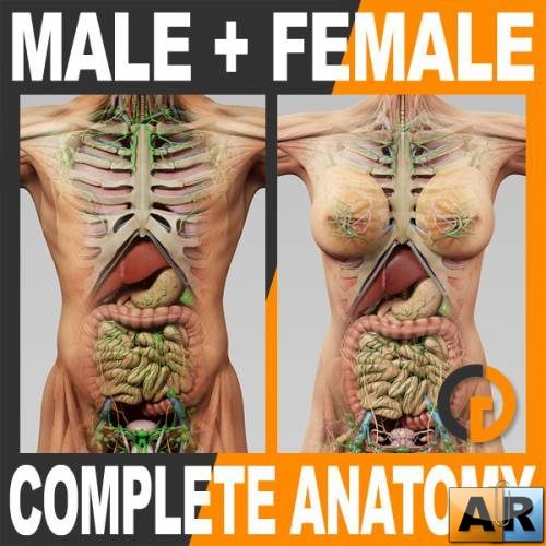 Turbosquid - 3D Human Male and Female Complete Anatomy
