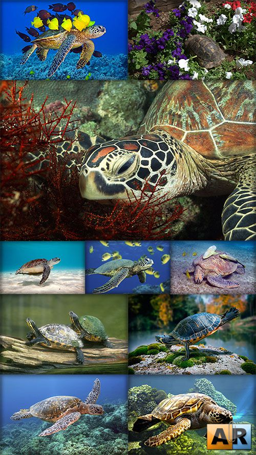 World of turtles